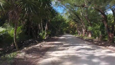 Jungle Road in Jamaica
